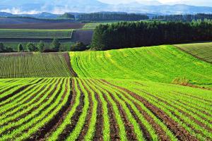 1447134293 agricultural-land